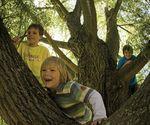 Nature deficit disorder 'damaging Britain's children' - BBC news