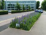 Conservation area: The University has set aside 1470m2 of land for wildflowers and grasses.