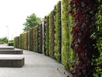 Examples of green walls