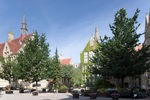 The University of Manchester launches new interactive tree trail