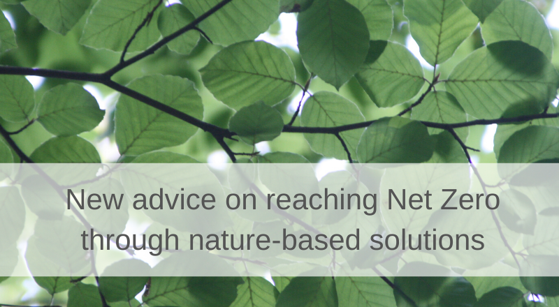Net zero and nature-based intervention - new advice released