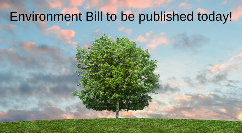 The Environment Bill - what are we looking for?