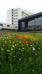 Sighthill campus with wildflower meadow in foreground