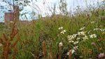 University of Swansea Launches New Biodiversity Action Plan